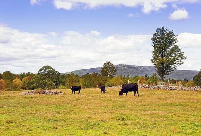 Monadnock View from Jaffrey Farm Photo