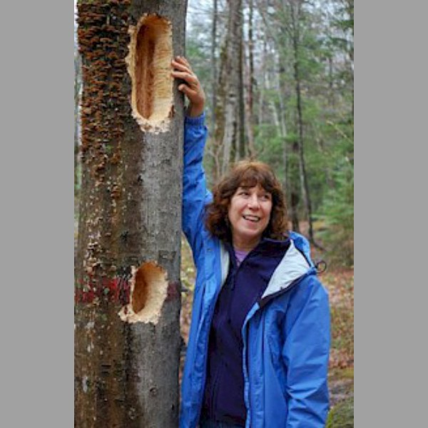 Linda Warren points out the damage done by the attack of the flightless, giant pileated woodpecker.