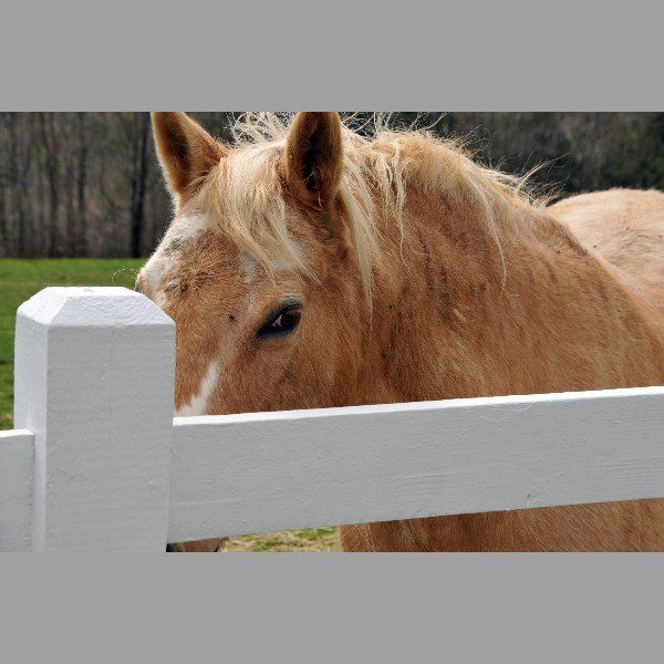 Horses Like Poetry Too
