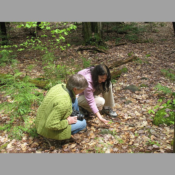 Linda and Clair Discover Something, Perhaps the Footprint of a Giant Road Tick.