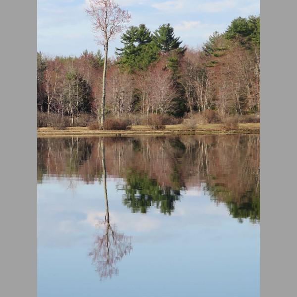 2015 Retreat: tree reflection